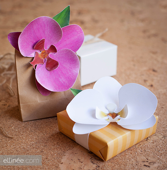 orchid paper Browse our menus of delicious asian cuisine we offer an array of delicious appetizers, main dishes, and desserts with options that everyone will enjoy.