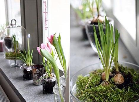 Schnittblumen mit Gartenpflanzen kombinieren