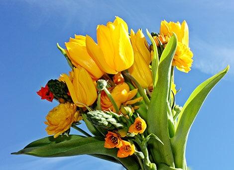Freude verschicken in Form von Blumen