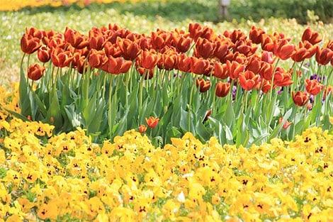 Ein fröhlicher Anblick: Intensives Orange trifft auf sonniges Gelb