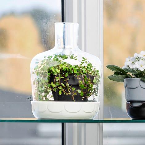 Mini-Gewächshaus in Flaschenform