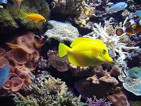Ein Aquarium hat eine beruhigende Wirkung