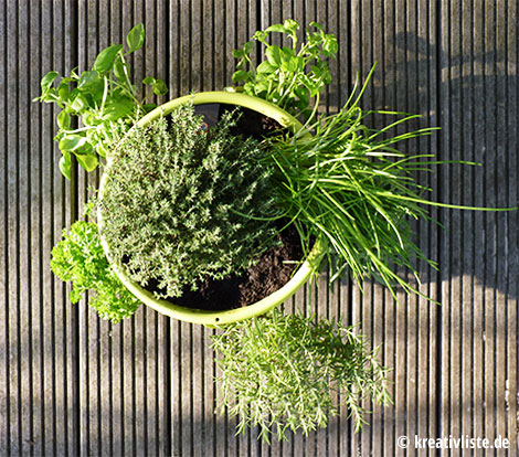 Der CASCADINO fertig bepflanzt