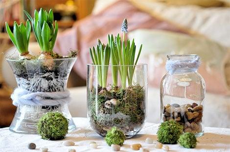 Frische Blumen bringen den Frühling ins Haus und sorgen für gute ...