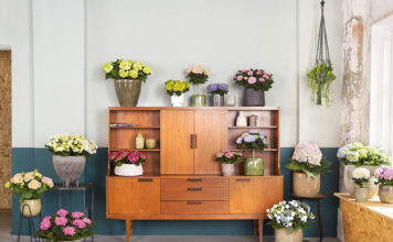 Hortensien bilden eine Blütenpracht in jedem Raum
