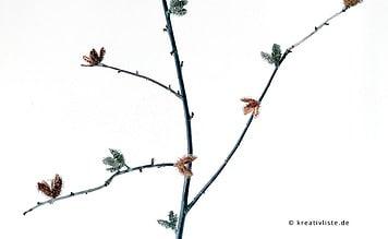 DIY Bastelidee im Herbst