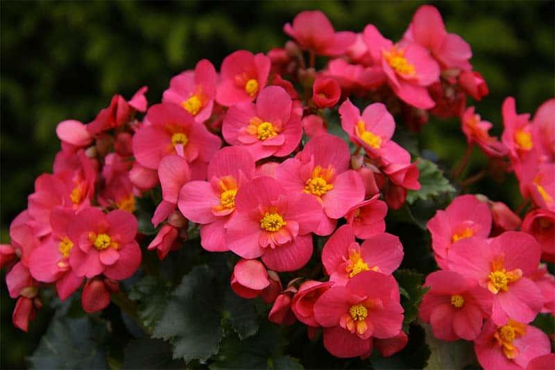 Die Calathea-Pflanze bringt lilafarbene und grüne Akzente in die Wohnung