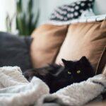 Hygge wird's mit vielen Kissen und Decken auf dem Sofa