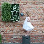 Vertikale Gärten begrünen einen kleinen Garten auf Zäunen und Wandflächen